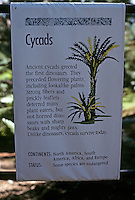 Pre-historic Animals:  Information sign on Cycads. Among surviving cycads is the sago palm.  Photo '90.