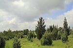 Shoham forest park in Western Samaria