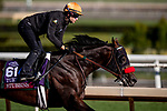 OCT 26: Breeders' Cup Turf Sprint entrant Stubbins, trained by Doug F. O'Neill, at Santa Anita Park in Arcadia, California on Oct 26, 2019. Evers/Eclipse Sportswire/Breeders' Cup