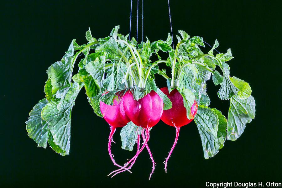Radish, mulitple exposure of radish in motion on black background.