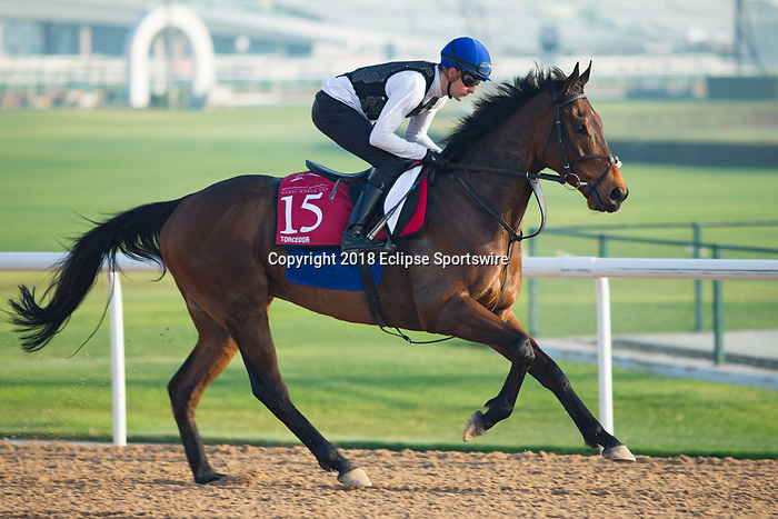 DUBAI,UNITED ARAB EMIRATES-MARCH 29: Torcedor,trained by Jessica Harrington,exercises in preparation for the Dubai Gold Cup at Meydan Racecourse on March 29,2018 in Dubai,United Arab Emirates (Photo by Kaz Ishida/Eclipse Sportswire/Getty Images)