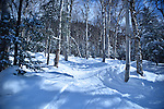 The snowy uncrowded glades during Presidents' week at Smugglers' Notch, Vermont