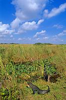 Swamps & Wetlands