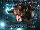 REALISTIC ANIMALS, REALISTISCHE TIERE, ANIMALES REALISTICOS, dogs, paintings+++++SethC_Hodge_IMG_2881rev2,USLGSC36,#A#, EVERYDAY ,underwater dogs,photos,fotos ,Seth
