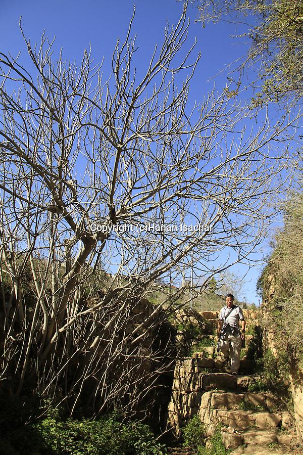 Israel, Ein Handak in Jerusalem mountains