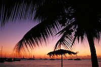 sunset silhouette of palm fronds & sailboat. Anagada, British Virgin Islands Caribbean.