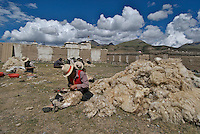 On the way to Lhasa from Namtso Lake, Nomads getting ready for the winter, shearing sheep