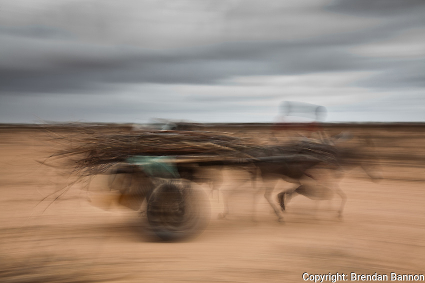 A Somali refugee using a donkey cart to move branches to make a temporary shelter in Ifo camp, part of the complex of refugee camps in Dadaab, Kenya. The donkey cart is means of survival for refugees, many having brought their few possessions across the howling desert of Somalia with the help of  their donkeys.