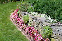 Stone wall with pink wax begonias, Iberis on stone dry wall, brick garden bed edging next to lawn grass