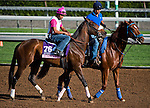 October 27, 2014:  Wonder Gal, trained by Leah Gyarmati, exercises in preparation for the 14 Hands Winery Breeders' Cup Juvenile Fillies at Santa Anita Race Course in Arcadia, California on October 27, 2014. Scott Serio/ESW/CSM