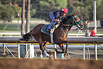 October 27, 2014: Stormin Lucky works in preparation for the Breeders' Cup Filly and Mare Turf at Santa Anita Park in Arcadia, California on October 27, 2014. Zoe Metz/ESW/CSM