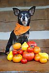 Carlos with Heirloom Tomatoes Pink Ponderosa, Purple Smudge, German Lunch Box, Black Cherry