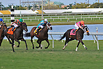 14 February 2010:  In The Rough with jockey Joe Bravo wins the Coconut Grove Stakes at Gulfstream Park in Hallandale Beach, FL..