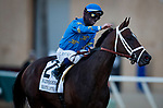 November 28, 2020: Umberto Rispoli gives la pat to Smooth Like Straight after running second in the Hollywood Derby at Del Mar Racecourse in Del Mar, California on November 28, 2020. Evers/Eclipse Sportswire/CSM