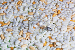 Pills and light bulb, bright idea.  Legal prescription drugs represented with light bulb on mirrored badkground.  Conceptual image representing drug culture, medical, insurance, dichotomy, and more.