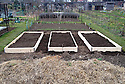 Newly constructed raised beds on an allotment plot.