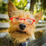 Henry's Happy Tails - Pet Portraits