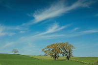 Fields near Roxburgh and the River Teviot, Scottish Borders
