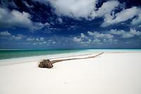 Fallen Coconut Palm on Prison Island, Cocos Keeling Islands, Indian Ocean