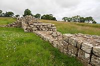 Northumberland, England, UK.  Hadrian's Wall, Black Carts Turret, near Walwick.