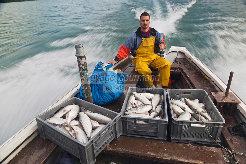 Europe/France/Rhône-Alpes/73/Savoie/Le Bourget-du-Lac/Bourdeau: Olivier Parpillon, pêcheur professionnel sur le   Lac du Bourget à la pêche  au lavaret ou féra [Autorisation : A12-3005]  // <br /> Europe / France / Rhône-Alpes / 73 / Savoie / Le Bourget-du-Lac / Bourdeau: Olivier Parpillon, professional fisherman on Lake Bourget fishing with lavaret or féra [Authorization: A12-3005]