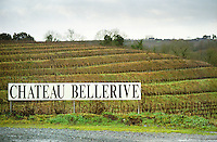 Terraced vineyard. In the Chaume appellation, Chateau Bellerive. Coteaux du Layon, Anjou, Loire, France