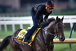 October 30, 2018 : Discreet Lover, trained by Uriah St. Lewis, exercises in preparation for the Breeders' Cup Classic at Churchill Downs on October 30, 2018 in Louisville, Kentucky. Michael McInally/Eclipse Sportswire/CSM