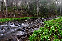 Second Pond Brook, Siamese Ponds Wilderness Area, Adirondack Forest Preserve, New York