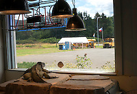 "A Rhino Iguana named ""Doc"" stares out the window of it's enclosure towards a parking lot at the Reptile Zoo in Monroe, Wash. on July 13, 2016. A sign posted on its enclosure said rhino iguanas come from the ""Carribean Island of Hispaniola"" and live in ""scrub woodlands, dry forests, and rocky habitats."" Another sign says that this species is listed as ""VULNERABLE"" on the IUCN Red List due to: human persecution, collection for food, importation for captive keeping purposes, and predation by invasive species (especially cats).<br />