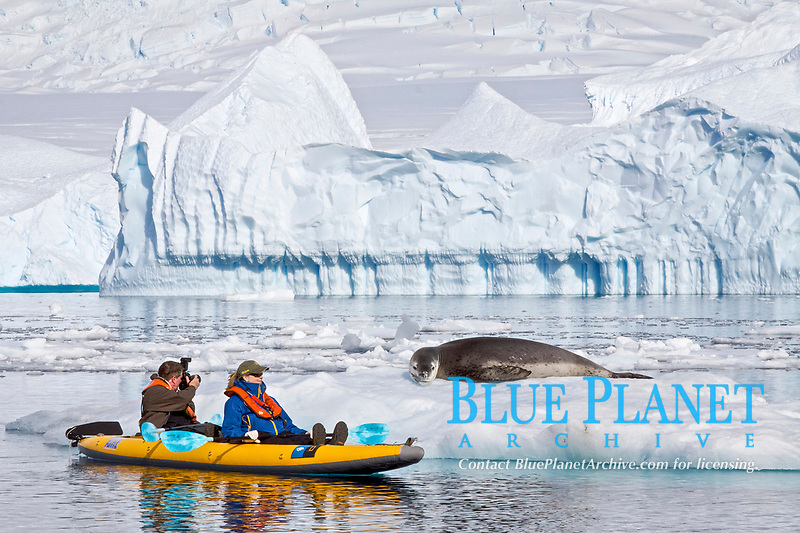 National Geographic photographer Joel Sartore and his wife Kathy kayaking with a leopard seal near Danco Island, Antarctica. The Leopard seal (Hydrurga leptonyx) is the second largest species of seal in the Antarctica, Antarctic Ocean Model release for Joel and Kathy JS0209.