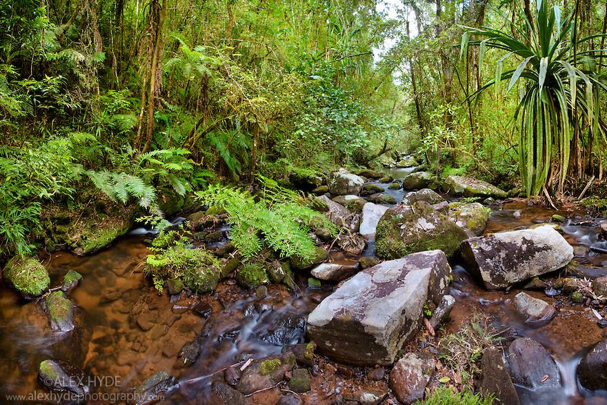 River running through montane rainforest. Andasibe-Mantadia NP, Eastern Madagascar.