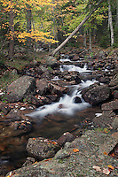Autumn Jordan Stream #A86