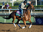 ARCADIA, CA - NOV 02: Twilight Eclipse, owned by West Point Thoroughbreds, Inc. and trained by Thomas Albertrani, exercises in preparation for the Breeders' Cup Longines Turf at Santa Anita Park on November 2, 2016 in Arcadia, California. (Photo by Kazushi Ishida/Eclipse Sportswire/Breeders' Cup)