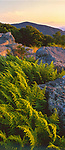 Shenandoah National Park, VA<br /> Late evening light on ferns tucked in a rock outcropping from Timber Hollow Overlook