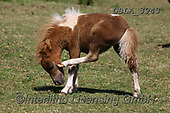 Bob, ANIMALS, REALISTISCHE TIERE, ANIMALES REALISTICOS, horses, photos+++++,GBLA3943,#a#, EVERYDAY