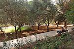 G-021 Habaron Garden in Rosh Pina