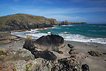 GBR, Grossbritannien, England, Cornwall, The Lizard Peninsula, bei Penza: Strand Kynance Cove | GBR, Great Britain, England, Cornwall, The Lizard Peninsula, near Penza: View over Kynance Cove
