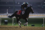 March 25, 2021: Dubai World Cup contender Ajuste Fiscal (URU) trains on the track for trainer Antonio Cintra at Meydan Racecourse, Dubai, UAE.<br />