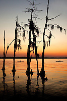 Kayakers may their ways before a line of weathered trees standing along the Pamlico Sound in North Carolina's Outer Banks. .Photography by: Patrick Schneider Photo.com