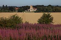 Morston, Norfolk, England, 03/08/2009..Wild lavender and Morston church.