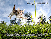 REALISTIC ANIMALS, REALISTISCHE TIERE, ANIMALES REALISTICOS, cats, paintings+++++,USLGSC162044513,#A#, EVERYDAY ,photos,fotos,pounce,cat,cats,kitten,kittens,Seth