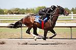 #18Fasig-Tipton Florida Sale,Under Tack Show. Palm Meadows Florida 03-23-2012 Arron Haggart/Eclipse Sportswire.