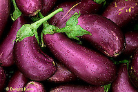 HS60-002b  Eggplant - Neon variety