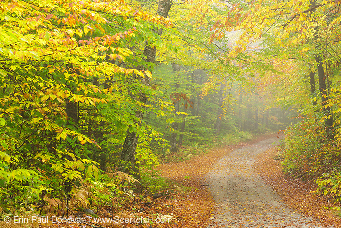Autumn foliage along Sandwich Notch Road in Sandwich, New Hampshire on a foggy autumn day. Established in 1801, this historic route is an 9 mile east–west one lane dirt road in the towns of Thornton and Sandwich.