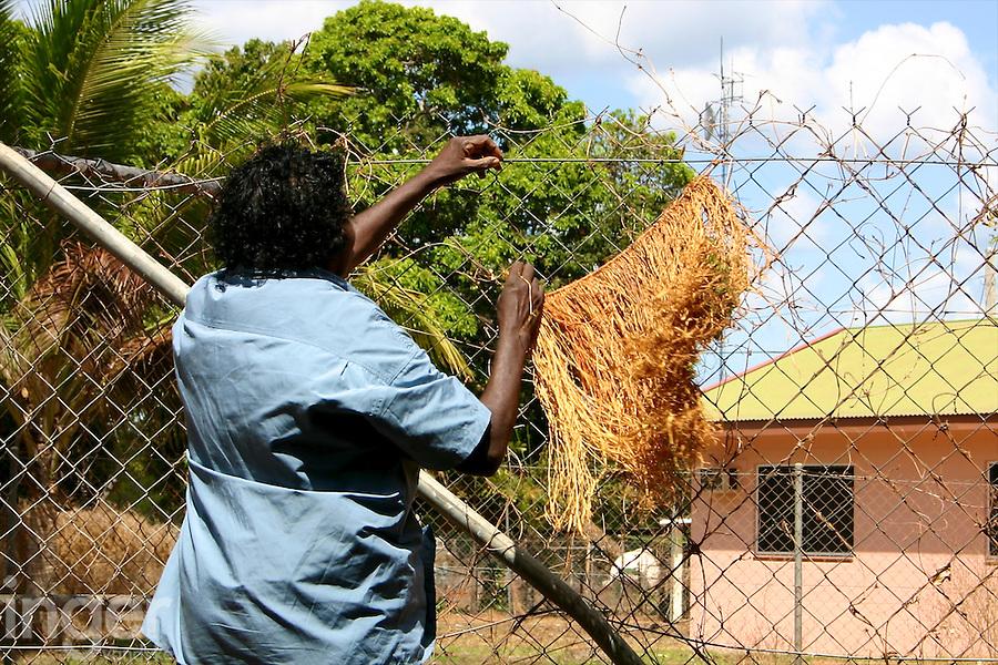 Mavis drying pandanus leaves at Aurukun, Gulf Of Carpentaria