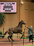 September 10, 2014: Hip #535 Candy Ride - Cloudburst colt consigned by Denali Stud, sold for $450,000 at the Keeneland September Yearling Sale.   Candice Chavez/ESW/CSM