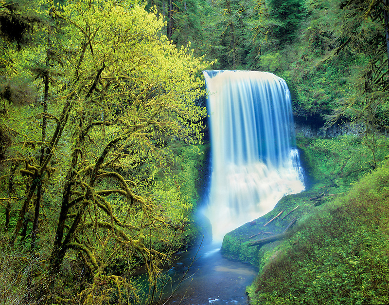 Middle North Falls with early spring growth.  Silver Falls State Park, Oregon