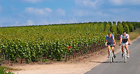 Two cyclists on bicycle downhill in the vineyards of Cote des Blancs through the vineyard of Champagne Francois Seconde, Sillery Grand Cru, Montagne de Reims, Champagne, Marne, Ardennes, France
