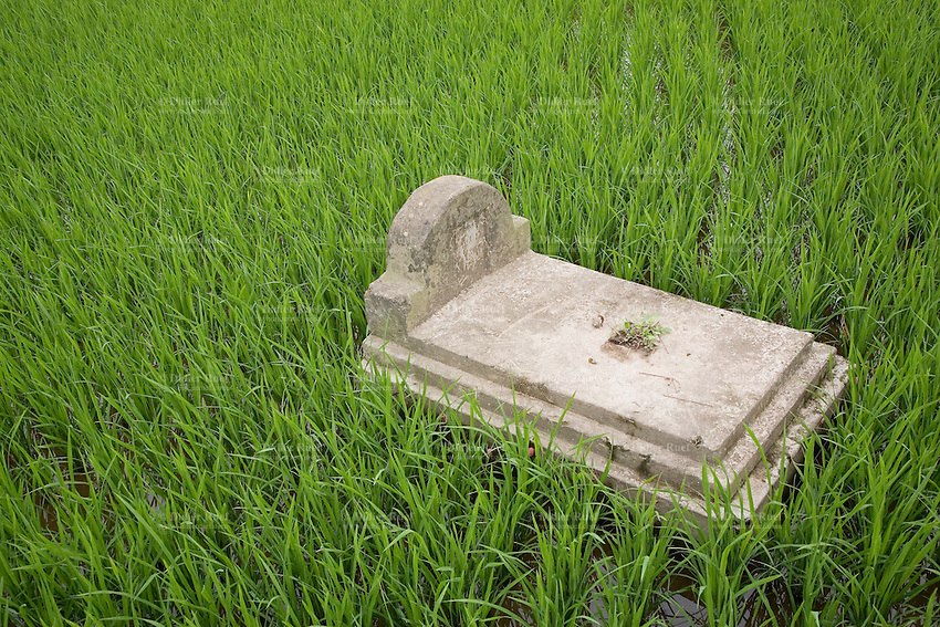 Vietnam. Ha Tay province. Lai Xa. Tomb in rice fields. Lai Xa is a typical hamlet (village) of the Red River delta region and is part of the Kim Chung commune located 15 km west of Hanoi. 06.04.09  © 2009 Didier Ruef