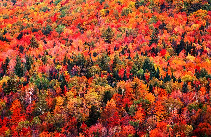 USA,Vermont, Marlboro. Autumn colors